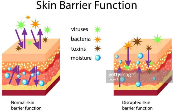 how to strengthen skin barrier